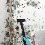 Black-Mold-Remediation-San Francisco